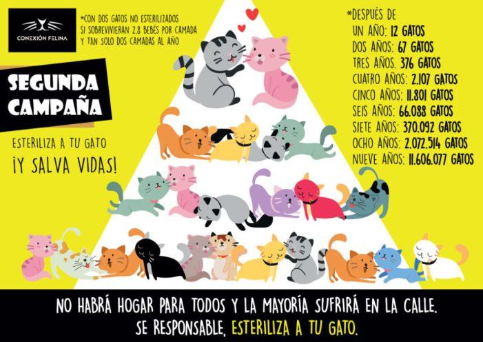 Llombai torna a sumar-se a la campanya d'esterilització de gats de la protectora Connexió Felina