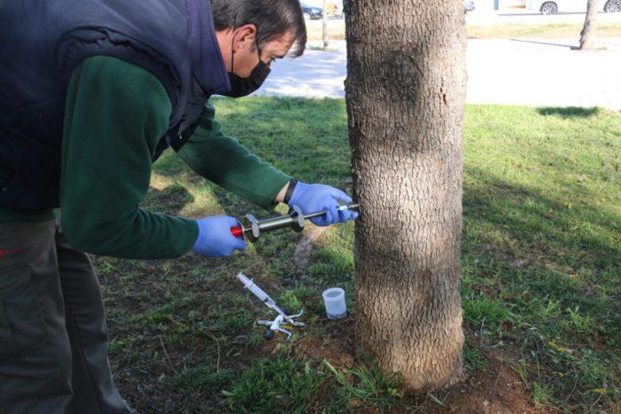 L'Ajuntament de l'Alcúdia adquireix l'equip i forma al personal de Parcs i Jardins per a realitzar l'endoteràpia a tots els arbres