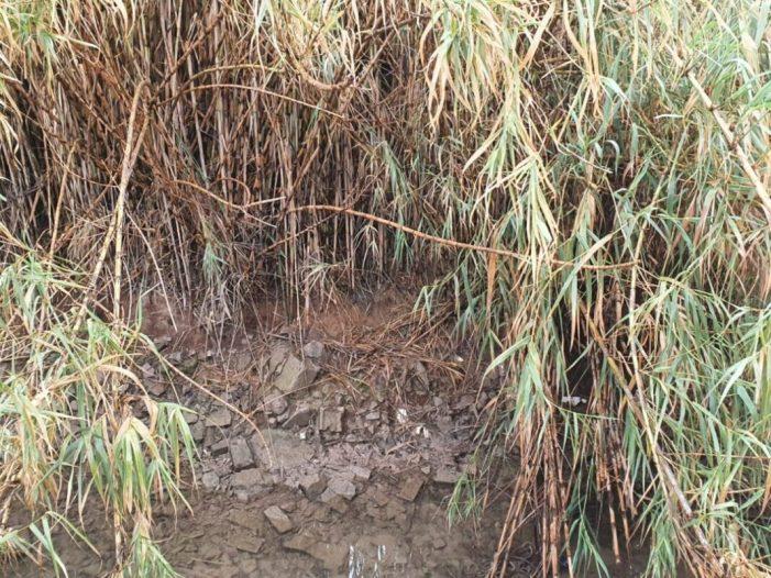 L'Ajuntament realitza gestions perquè la Comunitat de Regants actue en la zona de canyes junt als Molins del Pasiego