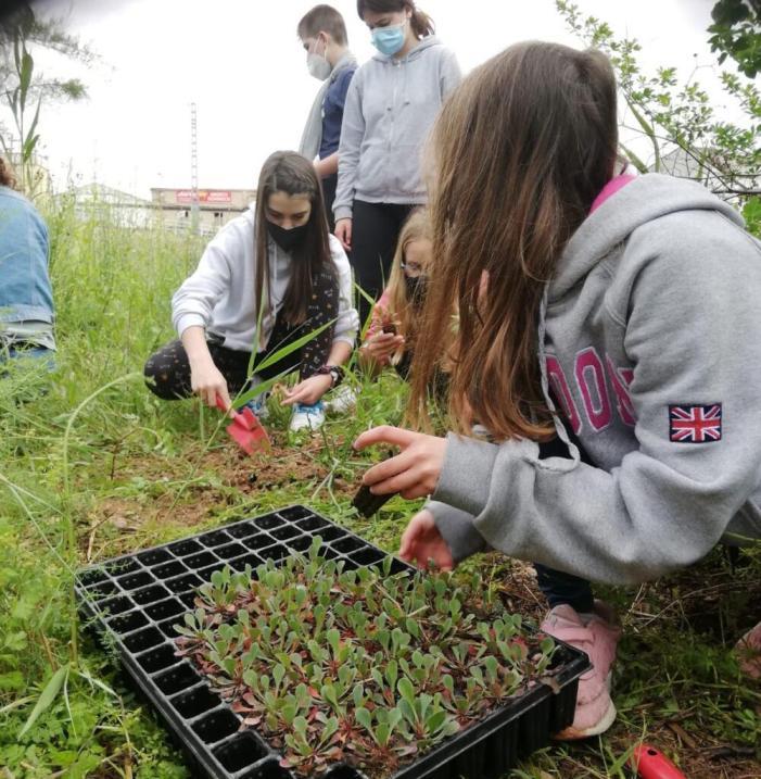 La fundació LIMNE i els alumnes de l'Institut de Càrcer planten vida a la vora del riu Sellent