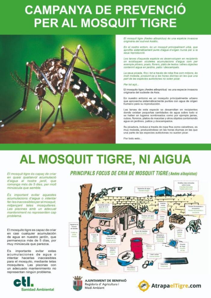 Campanya mediambiental a Benifaió contra el mosquit tigre