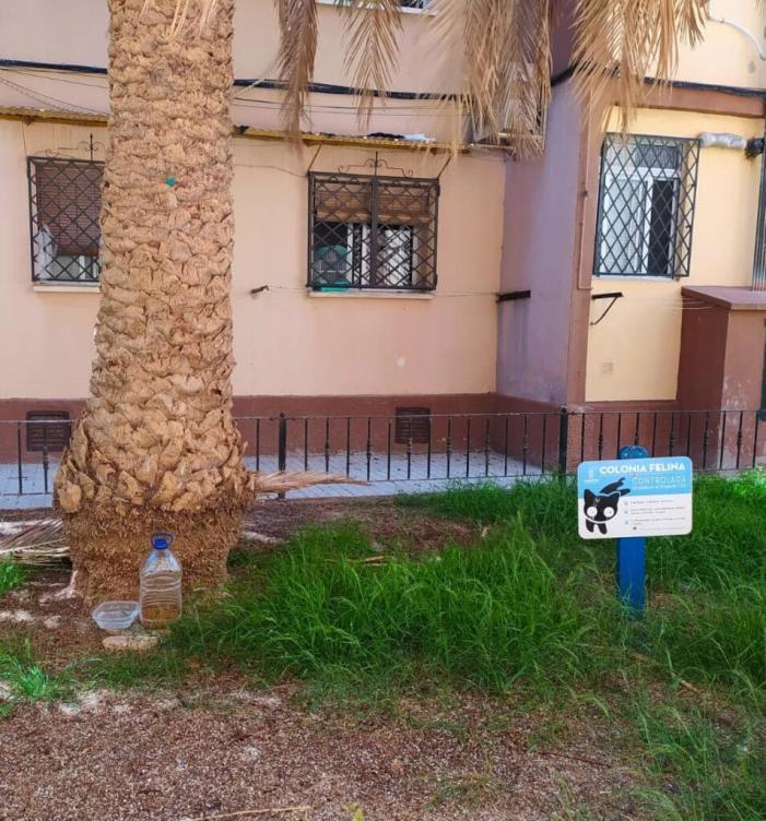 Les Colònies Felines d'Alboraia van dur a terme l'esterilització de 67 felins durant l'any passat