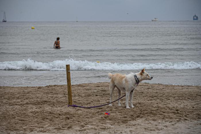 La platja can de Pinedo inicia la temporada amb un 50 % més de superfície davant l'increment d'usuaris