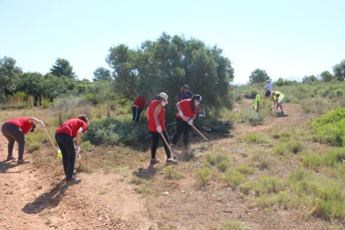 L'Alcúdia contracta 154 persones per a la neteja de barrancs i el Corral de Rafel