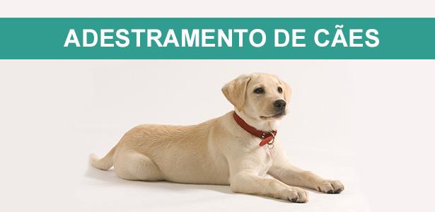 Adestramento de cães. cursos de adestramento e comportamento, adestramento de cães, ricardo tamborini, adestrador, especialista em comportamento, canino