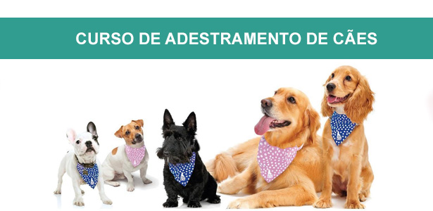 curso de adestramento de cães e marketing, cursos de adestramento e comportamento, curso de adestramento de cães e marketing