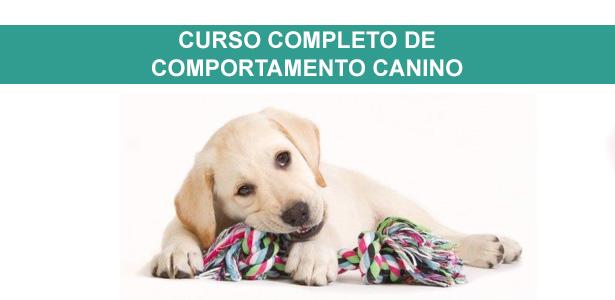 Curso de comportamento canino e Marketing, Curso completo de comportamento canino, cursos de adestramento e comportamento