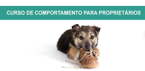 Curso de comportamento canino para proprietários, CURSO BÁSICO DE COMPORTAMENTO PARA PROPRIETÁRIOS, Curso de comportamento canino para proprietários, cursos de adestramento e comportamento