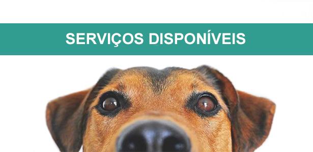 Serviços de adestramento e comportamento canino