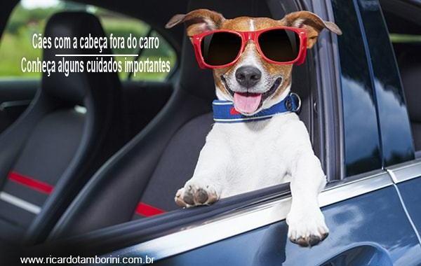 Conheça alguns cuidados importantes com cães que gostam de andar com a cabeça fora do carro!