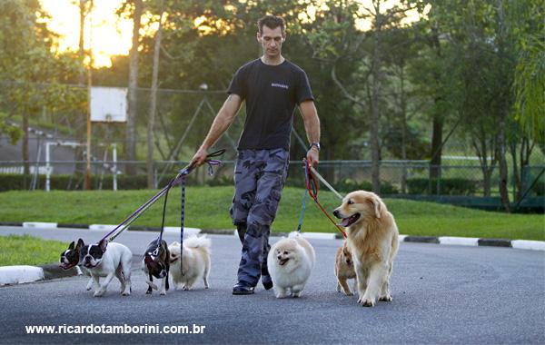 Como passear com o seu cachorro