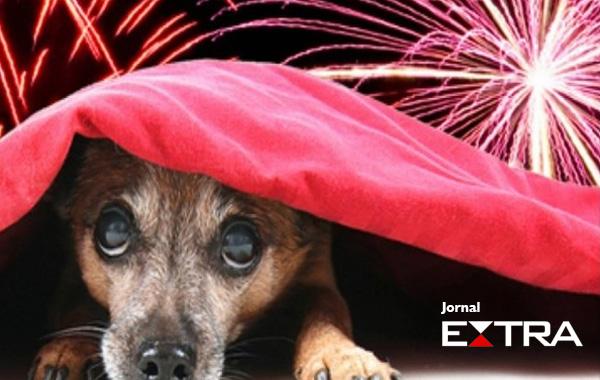 Cães que tem medo de fogos de artifício