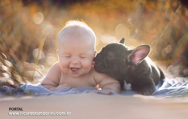 Como tornar harmoniosa a convivência entre cães e bebês recém-nascidos