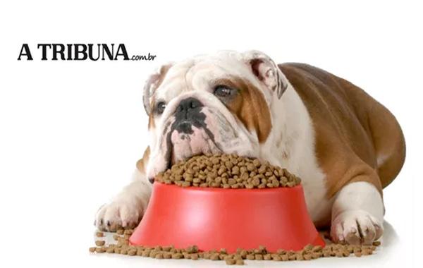 Entenda o porquê seu cachorro come demais e parece insaciável