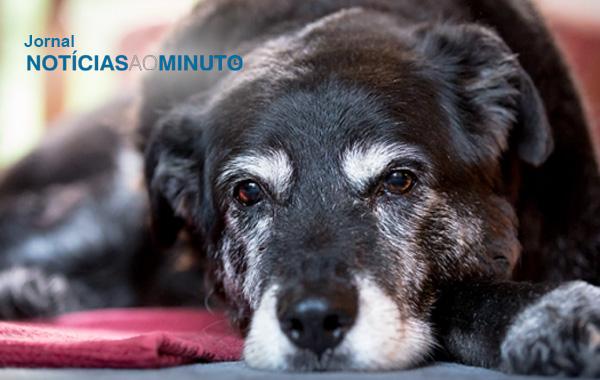 Saiba como manter a saúde dos cães idosos – Noticias ao Minuto
