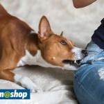 10 coisas que você faz e seu cão odeia - Top Dicas