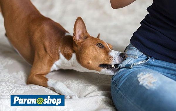 10 coisas que você faz e seu cão odeia – Top Dicas