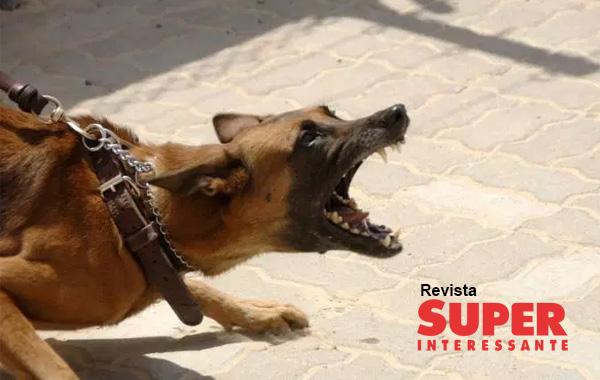 Como se defender de um ataque de cachorro?