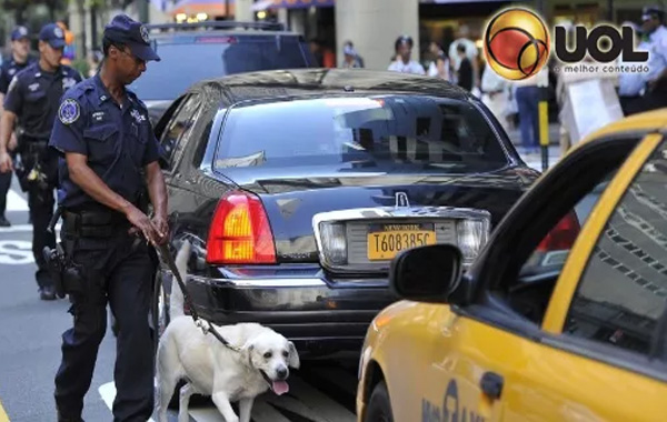 Labradores são arma de polícia nos EUA no combate a pornografia infantil