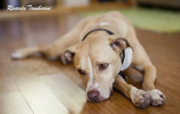 6 sinais que mostram que o seu cão pode estar infeliz