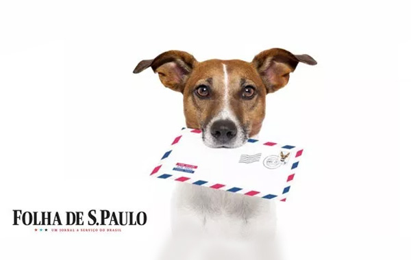Cachorro late e tenta avançar no carteiro? Entenda e saiba o que fazer