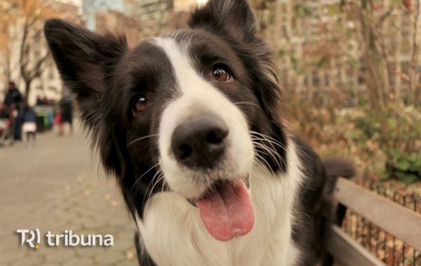 10 curiosidades sobre seu cachorro, que você nem imaginava