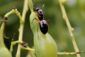 Le formiche e il grano plasticoso!