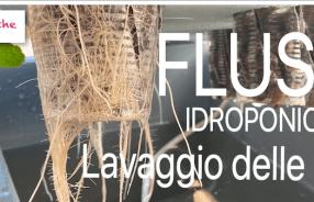flush flushing lavaggio delle radici idroponica e vaso
