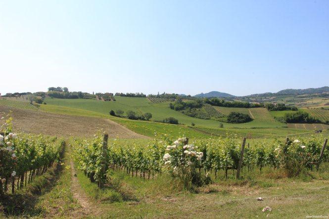 wine-trekking-in-romagna-tenuta-santini