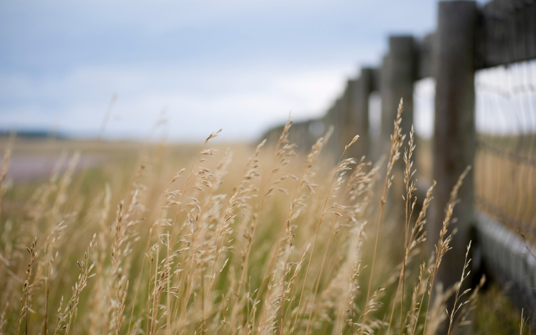The Weeds and Christian Politics