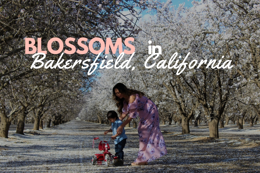 BLOSSOMS IN BAKERSFIELD