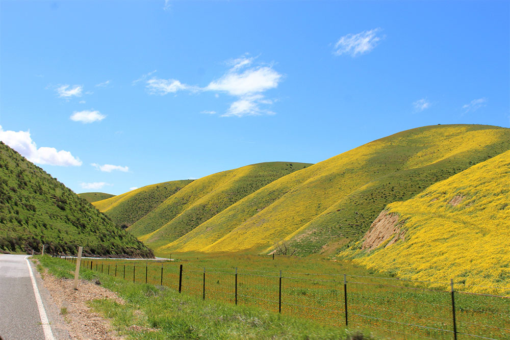 California Spring 1