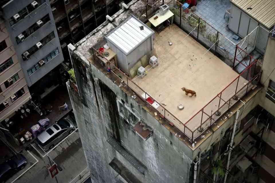 Loneliest dog Hongkong