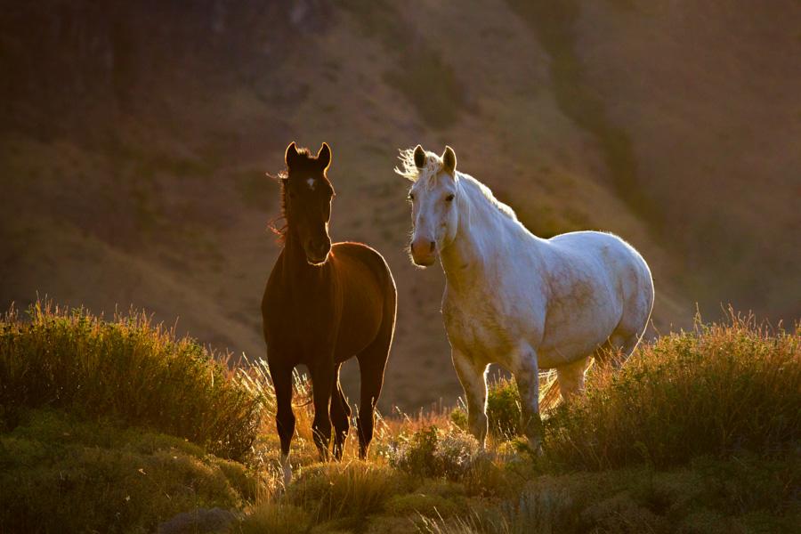 Caballos de Patagonia
