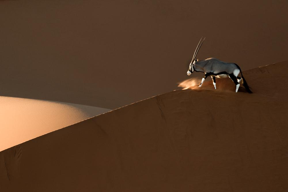 Oryx in Namib-Naukluft National Park, Namibia