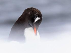 Antarctica, Terra Incognita