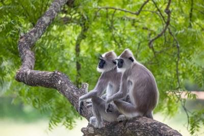Zen Monkeys