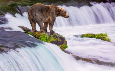 Behind The Lens: Brooks Falls, Alaska