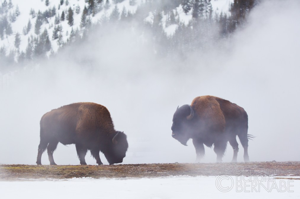 Behind The Lens: Yellowstone in Winter