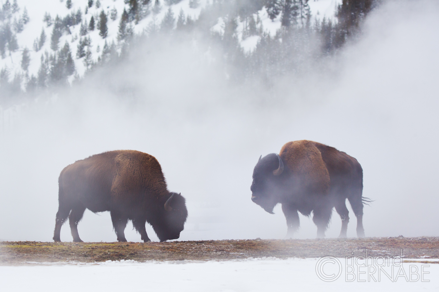 Behind The Lens: Yellowstone in Winter | Richard Bernabe
