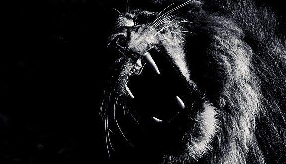 lion portrait, black and white, masai mara