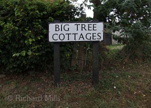 Big-Tree-Cottages