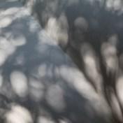 Grey shadows, Goodwood Sculpture Park