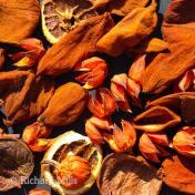 Orange-AN-©