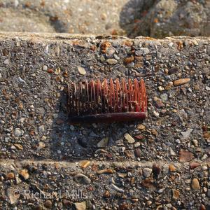 Hill Head - Jan 2015 082 esq © resize
