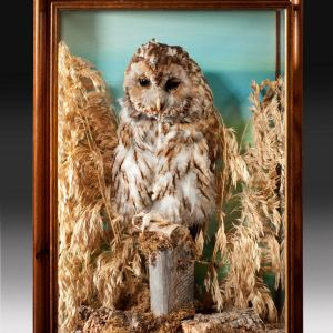 ANTIQUE TAXIDERMY STUFFED OWL IN GLASS CASE