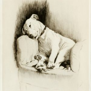 CECIL ALDIN-ETCHING-CRACKER, BULL TERRIER