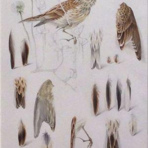 MILDRED E ELDRIDGE-WATERCOLOUR PAINTING-BIRDS