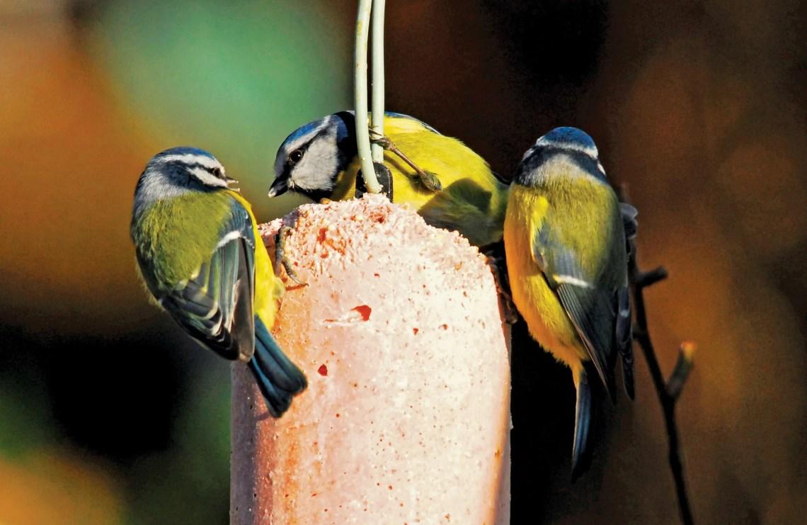 Best Way To Feed The Birds Top 5 Ways To Feed Garden Birds
