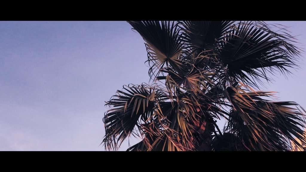 Cinematic iPhone Footage - Palm Tree 150%